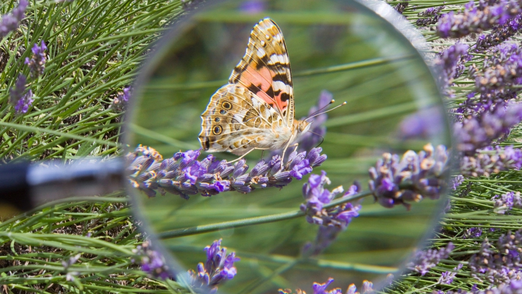 Papillons.jpg