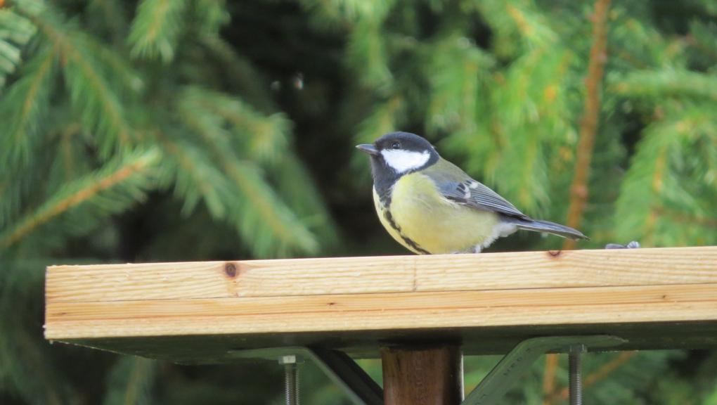 BirdLab -  © martine_delalande - mnhn