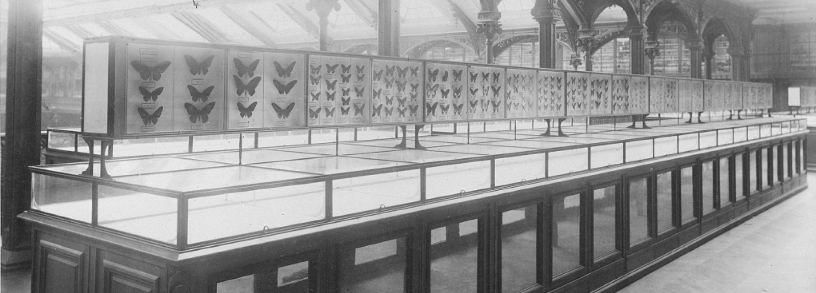 vitrine d'entomologie 1892 © MNHN - direction des bibliothèques
