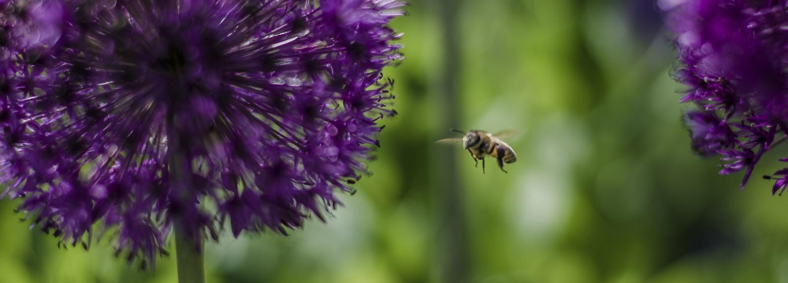 Pollinisation - ©pixo7000