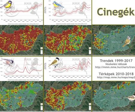 Oiseaux_Hongrie© MME Monitoring Központ