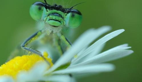 220_Dragonfly_by_Bullter.jpg