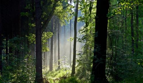 Forest_by_Vukar.jpg