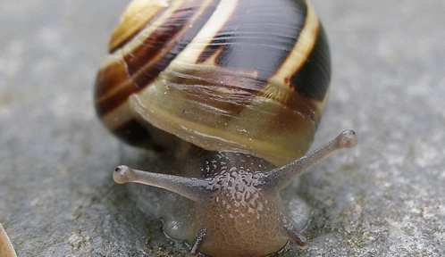 Snail_GuttormFlatabo.jpg