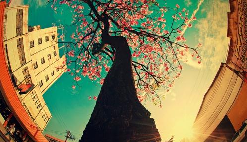arbre street.jpg