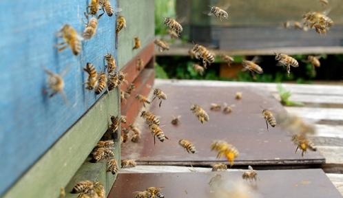 honeybees@Antjeflickr.jpg