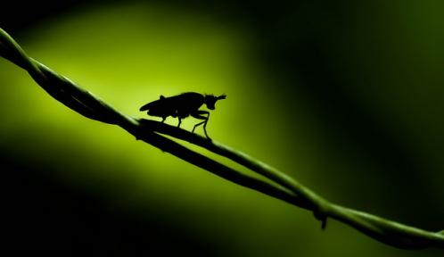 insectesmystère@michel larreguyflickr.jpg