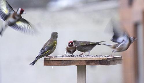 post-birdlab.jpg