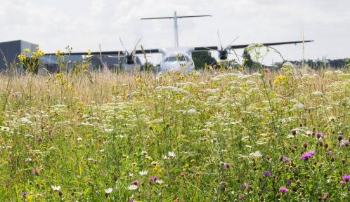 aéroports © Aéro_Biodiversité