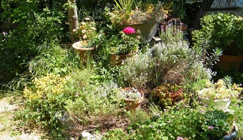 jardin ©pierre_jean_bernard