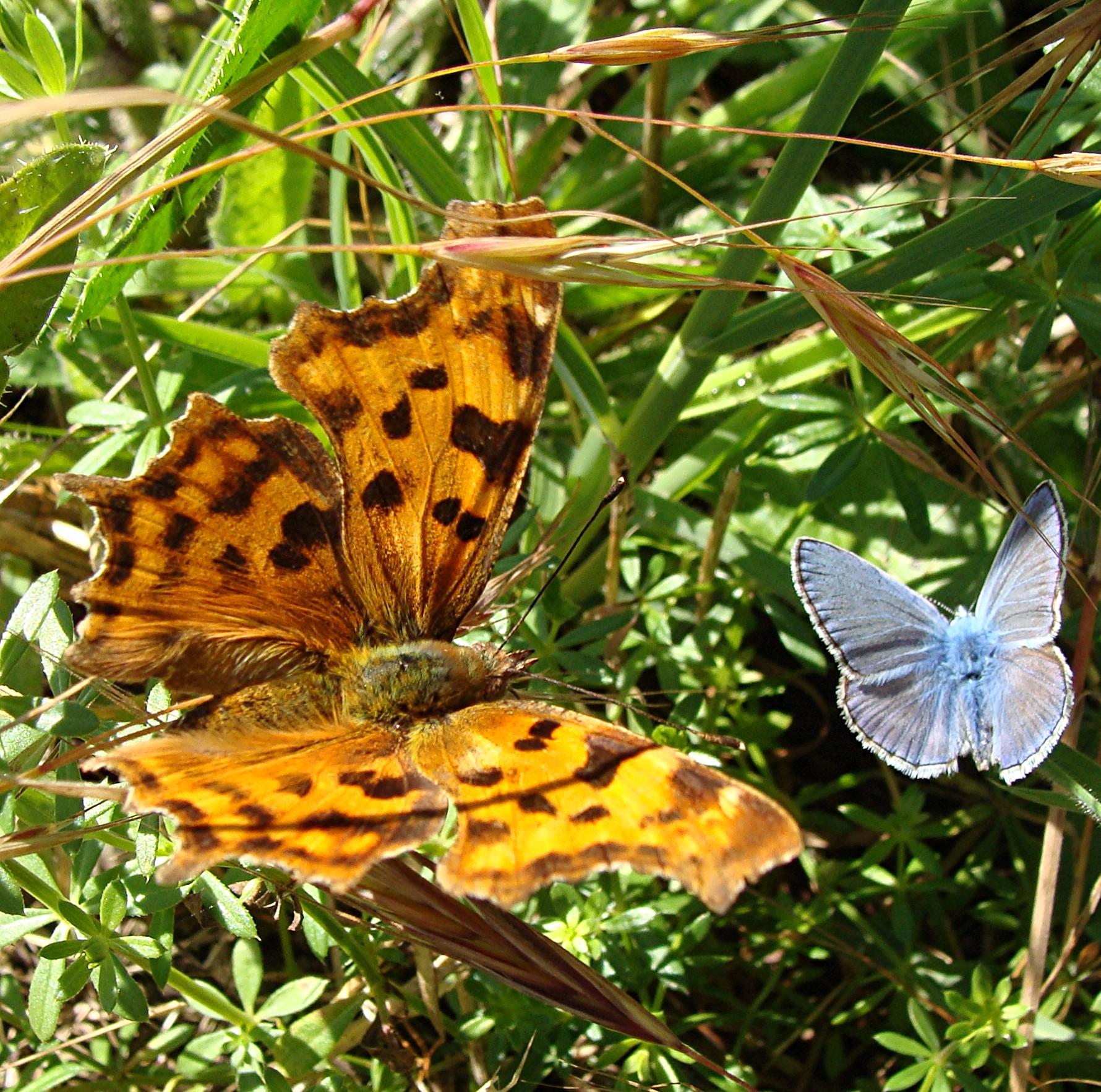 papillons © Monique_Mus