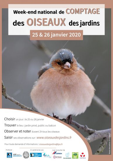 Comptage_Oiseaux_des_jardins