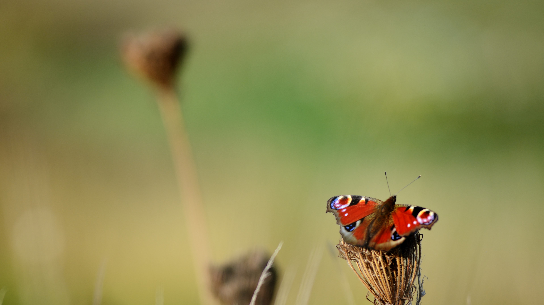 papillon © Martin Jeanmougin -mhn