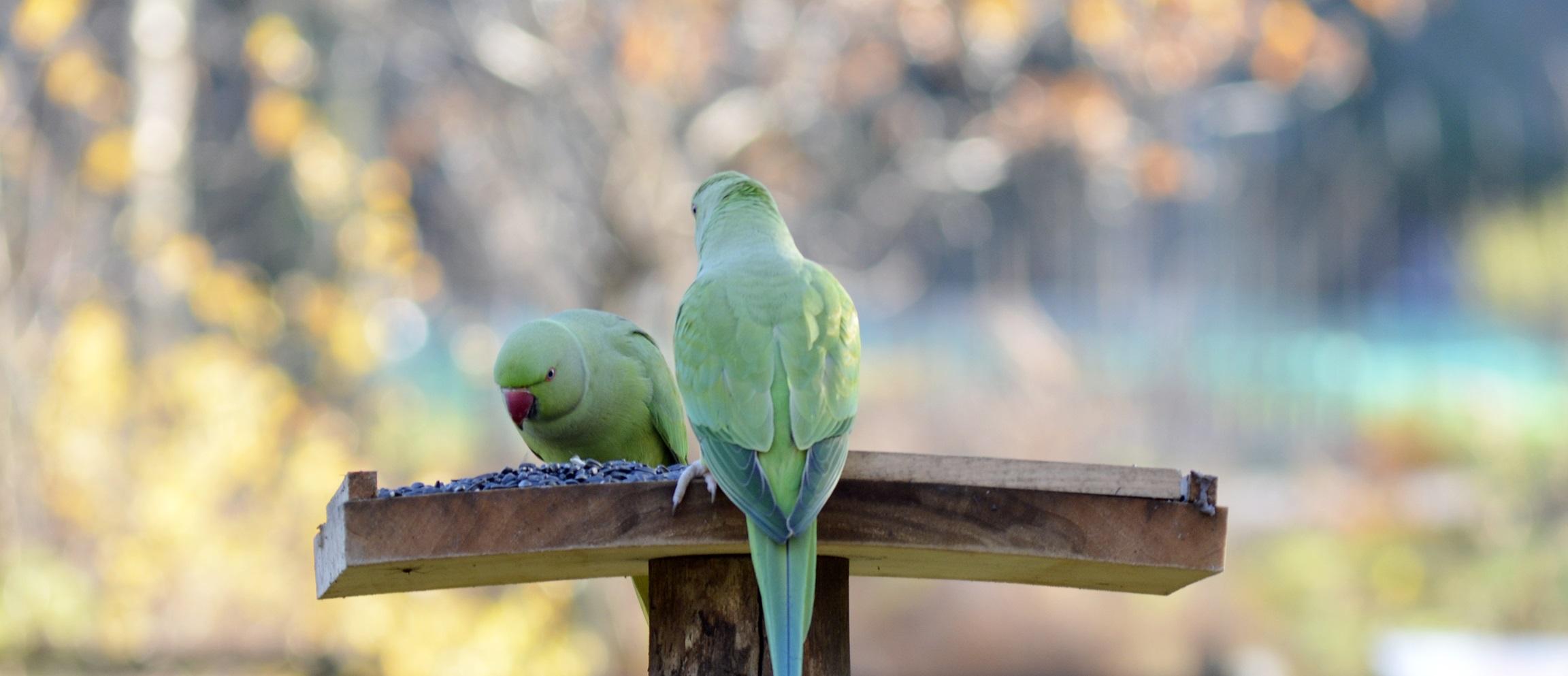 birdlab-perruches_laetitia-brevet.jpg