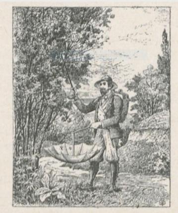 gravure d'une chasseur d'insectes  © Le Naturaliste amateur, 1903