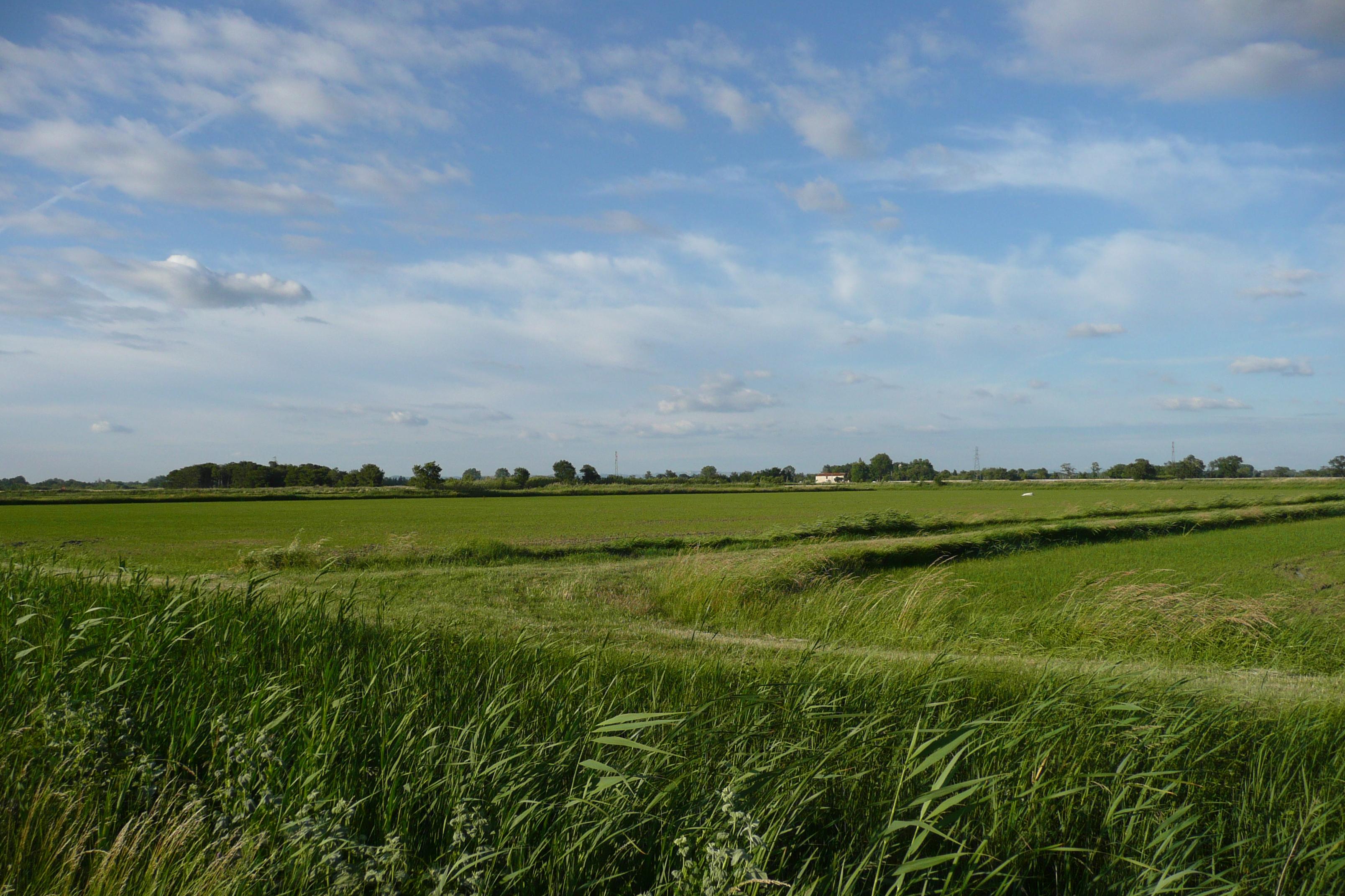 champs riz © vi.cult