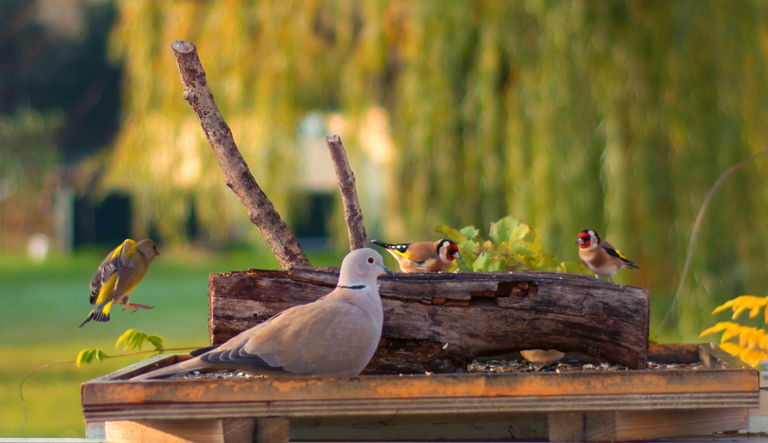 BirdLab © Dominique Ferreres