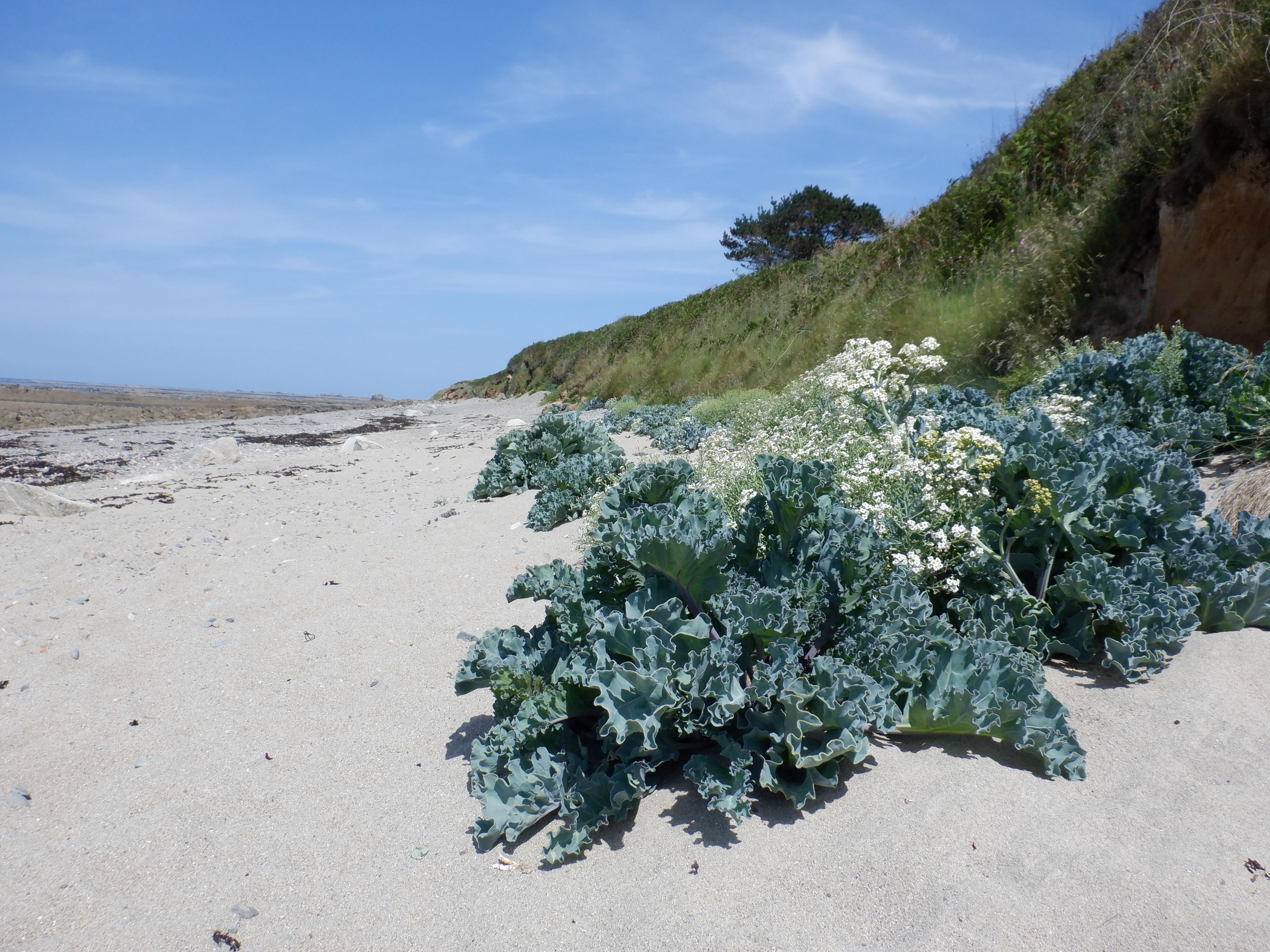 plages vivantes © Pauline Poisson