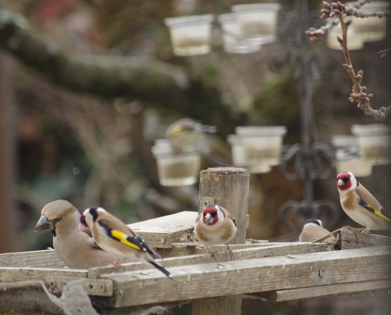 BirdLab -  © jean_luc_tovar