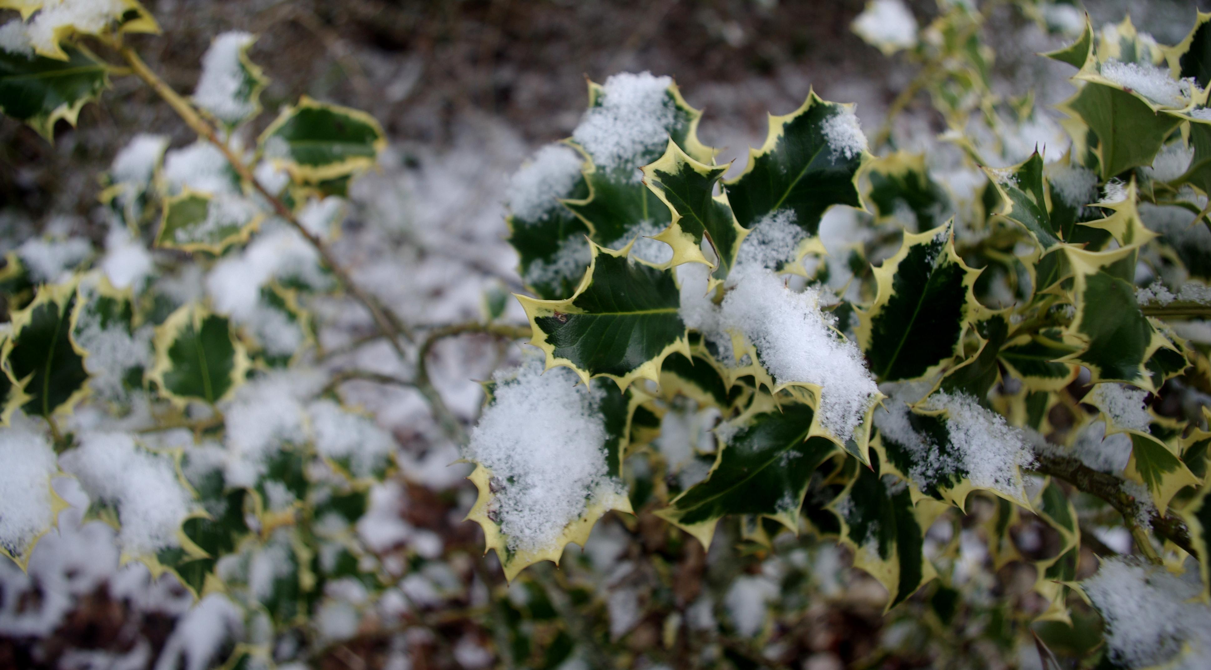 Jardin_hiver ©manguy bruno (Flickr)