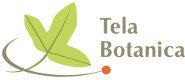 logo_tela_botanica