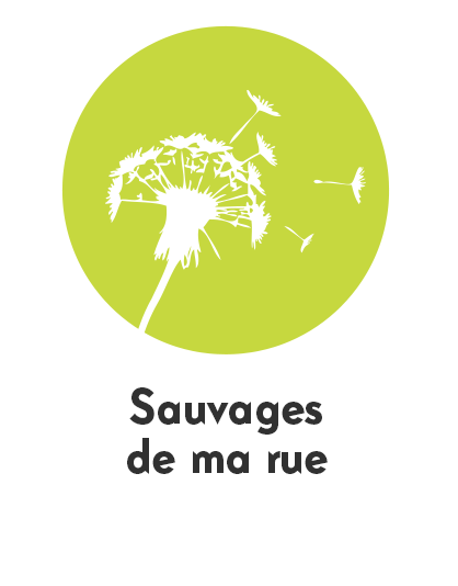 pictosauvages2.png