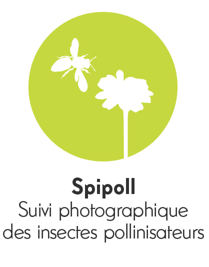 pictospipoll.png