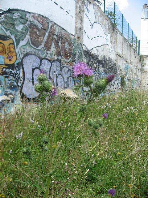 © cultures en herbes | Flickr